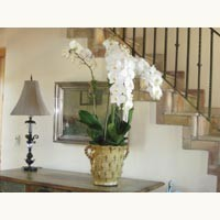 Orchid Installations