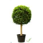 Ficus Nandina